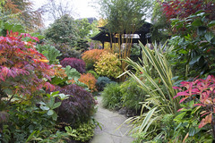 Pagoda path in autumn (Four Seasons Garden) Tags: uk autumn england colour leaves yellow garden four japanese golden pagoda wooden maple stem october seasons award bamboo foliage national deciduous winning walsall culms phyllostachys 2015 acers aureosulcata aureocaulis crookstem