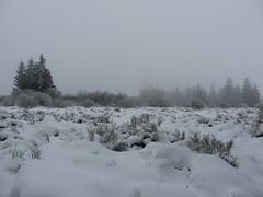 IMG_8628 (Bike and hiker) Tags: winter mist hiver sneeuw neige venn hoge hautes fagnes venen hohes botrange neur bayehon low