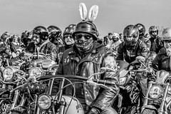 Hell's Bunnies, Wirral Egg Run 2016 (warrengreenjelly1) Tags: bunny leather easter egg bikes run harley chrome angels davidson bikers wirral hells