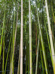 _C122650-web-17.jpg (laurenz.lanik) Tags: vienna bamboo botanicgarden bambus botanischergarten
