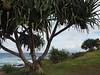 E1040081 (ericse) Tags: australie kingscliff