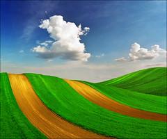 Happy dog  - Pannonian spring fantasy (Katarina 2353) Tags: green film landscape spring nikon flight dream fields photopainting katarinastefanovic katarina2353 serbiainspired galerijablueplanet