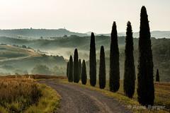 cypresses (Anne.Berger) Tags: landscape tuscany cypress valdorcia landschaft toskana zypressen