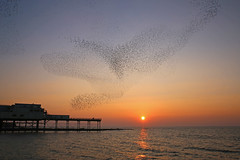 Starling Sunset 2 (John Ibbotson (catching up!)) Tags: sunset sea sun birds wales evening coast pier cymru aberystwyth ceredigion starlings roost murmuration