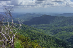 The Pinnacle - Gold Coast in the distance (NettyA) Tags: landscape australia bushwalking qld queensland bushwalk thepinnacle goldcoast springbrook goldcoasthinterland 2016 springbrooknationalpark scenicrim seqld warriecircuit scbwc sonya7r