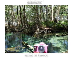 CELESTUN (BE'N 59) Tags: yucatan mangrove mexique clestun