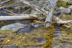 The Crooked River (jimgspokane) Tags: camping rivers forests creeks crookedriver otw idahostate nikonflickraward