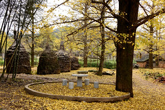 Ginkgo village (MelindaChan ^..^) Tags: china autumn plant tree fall yellow leaf ginkgo village guilin mel melinda guangxi 桂林 廣西 chanmelmel melindachan 小平樂 海洋鄉