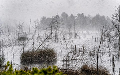 Schneesturm im Filz (novofotoo) Tags: schnee bayern deutschland natur moor regen wetter unwetter motiv sterntalerfilze badfeiilnbach