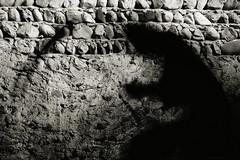 Lei (Matteo Salvador) Tags: she shadow dark death ombra lei morte oscura matteosalvador nerafalce blackscythe