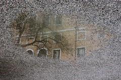 venice. downtown (marci.icram) Tags: venice canon venezia sanmarco giardini rivadeglischiavoni sestiere canoneos60d marciicram