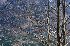 spring is about to come (Catherine Q Li) Tags: blue tree green nature leaves germany spring outdoor     knigssee