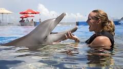 Marineland (Julie Fletcher for VISIT FLORIDA) (VISIT FLORIDA) Tags: usa tourism water florida dolphin explore marineland palmcoast visitflorida