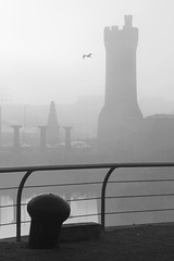 free as a bird (Towner Images) Tags: bird silhouette liverpool dock seagull gull free quay wharf wapping dockyard rivermersey towner townerimages