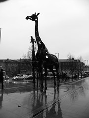 Giraffes (Pilar Palomo) Tags: uk winter black blancoynegro blanco monochrome rain scotland blackwhite lluvia edinburgh pentax unitedkingdom negro escocia giraffes invierno giraffe edimburgo jirafa pentaxlife pentaxart pentaxx70