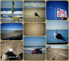 Pacific Beach (France-) Tags: usa beach collage sandiego sable pacificocean pacificbeach plage mouette seagul californie ocan ocanpacifique