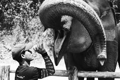 Say aaaaaa (skamalas) Tags: elephant mouth thailand feeding villager mahoot
