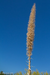 IMG_2924.jpg (ashleyrm) Tags: travel arizona museum sonora desert tucson tucsonarizona