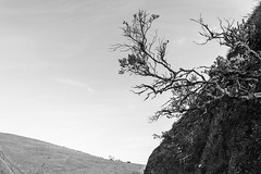 tilden160211-070.jpg (Yvonne Rathbone) Tags: branches graphic hill meadow minimal minimalism monochrome quiet solitude triangle technical 1855mmf3556gvr blackwhite parks wideangle