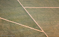Vineyard Patterns (Panorama Paul) Tags: sunrise southafrica vineyard patterns wellington aerialphotography westerncape nikkorlenses nikfilters nikond800 wwwpaulbruinscoza paulbruinsphotography nicokohne