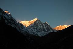 Our last morning (Pooja Pant) Tags: nepal mountains beautiful trek abc annapurna annapurnabasecamp macchapuchre