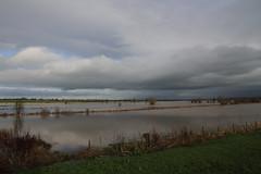 Curry Moor, Somerset (Robin M Morrison) Tags: flood somerset plain currymoor