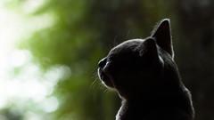 Charlie (wtewg) Tags: summer composition cat 50mm january australia victoria nikond50 charlie 30th 16x9 2016 maribyrnong
