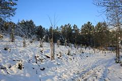 Çayırova'dan Kar Manzaraları 27