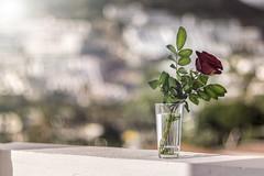 _IMG7598_11 (Robert Björkén (Hobbyfotograf)) Tags: red flower rose puerto dof bokeh puertorico grand rico spanish canaria grandcanaria barlovento