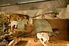 Dimetrodon () (Bri_J) Tags: japan museum tokyo    uenopark dimetrodon   nationalmuseumofnatureandscience
