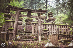 Koya San (Orel Kichigai) Tags: wood travel blue sea wild mountain game tree tourism nature water animals sport yellow rock japan forest children japanese aquarium tokyo wooden san photographer child traditional battle tourist seal koyasan dome koya octopus seals osaka sumo tradition tentacle tentacles kaiyukan okunoin rikishi okuno sumotori kaiyukan4