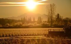 Maple Ridge (Ian Threlkeld) Tags: sunrise landscapes nikon flickr baker bc britishcolumbia explorer explore pacificnorthwest westcoast pnw mapleridge irt mountbaker mtbaker nikonphotos pittmeadows beautifulbc nikonphotographer nikonphotography ridgemeadows nikonphotographers d7000 mynikonlife