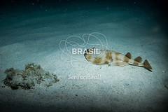 NE_Abrolhos0032 (Visit Brasil) Tags: horizontal brasil fauna natureza bahia nordeste detalhe externa abrolhos semgente subaqutica diurna