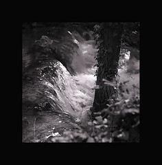 Be water (_Anana_) Tags: naturaleza tree water monochrome landscape monocromo agua bn rbol yashica 120mm