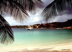 Club Med Caravelle (pandt) Tags: ocean trees sea sky film beach water canon coast sand sailing kodak ae1 outdoor palm shore catamaran caribbean guadeloupe clubmed caravelle