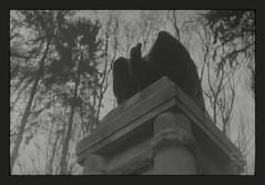 overhead and overcast (Polar Noire) Tags: germany memorial war eagle decay fear overcast misery tyskland allemagne worldwar birdofprey argentique ontherise greyskies pellicule dullday adonal