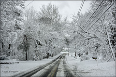 SNOW DAY, I (susies.genii) Tags: scenery outdoor streetscene snowday snowcoveredtrees winterscene heavysnow unplowedroad february52016