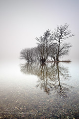 Loch Lomond Mist (hmbautista) Tags: trees mist lake reflection tree water misty fog landscape island photography bay long exposure alone foggy scottish peaceful calm mysterious lone loch minimalism lomond trossachs milarrochy