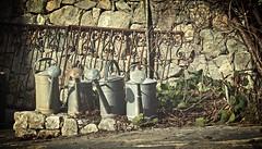 les vieux arrosoirs (bulbocode909) Tags: maisons jardins arrosoirs ferrailles