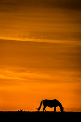 I remember the sun (cs82photography) Tags: sunset sky horses orange colour home silhouette canon 6d