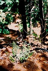 Mt Vic undergrowth (Stephen Dowling) Tags: travel newzealand summer film 35mm xpro crossprocess wellington russiancamera zenitttl sovietcamera agfact100precisa helios44582