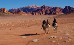 Touring (Don Csar) Tags: mountains berg landscape sand desert wadirum paisaje tourist arena jordan camel desierto montaas bedouin jordania camellos