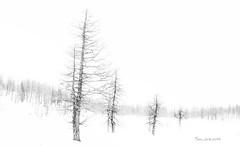 Lost (Soloross) Tags: trees winter light blackandwhite italy mountain snow beauty alberi landscape day artistic highkey inverno montagna openair