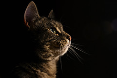 Out of darkness (Steve.T.) Tags: animal cat dark furry nikon feline darkness pussy whiskers puss pussycat catseye petportrait elgato moggy furryfriend catswhiskers petcat sigma18200 d7200