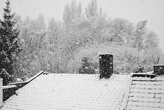 first snow 2016 (Wim Vandenbussche) Tags: winter snow cold ice sneeuw ijs koud