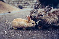 No Food for You (dtchan) Tags: 50mm voigtlander rabbits nokton rabbitisland babyrabbit sonya7