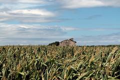 Mar de maz (barcava_) Tags: casa asturias cielo campo maz
