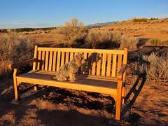New Bench (suenosdeuomi) Tags: newmexico santafe bench sumo dogpark canons90
