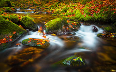 Flow (Sijie Shen) Tags: park autumn holiday black color reflection nature water leaves horizontal forest river germany landscape flow waterfall rocks colorful europe long exposure image hiking weekend national activity schwarzwald allerheiligen oppenau