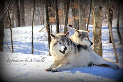 2016-17 (Inspiration By Michelle) Tags: canada animals quebec omega parc parcomega